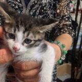 里親の気が変わり戻って来た子猫のサムネイル
