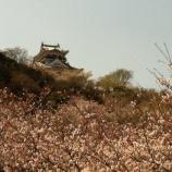 『(番外編)実に見事だった千葉県館山市・館山城の桜の風景』の画像