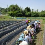 『子どもたち、植える』の画像