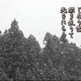 『シュワちゃんの怒り』の画像