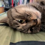 Nobody knows -- my life with a blind cat --