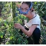 宮崎県で収穫直前の野菜盗難相次ぐ・・・被害者落胆「もう気力も萎えた。栽培やめる・・・」