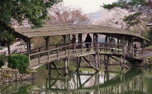 """""""独特な雰囲気""""の橋と満開の桜を撮影"""
