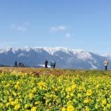 『早咲き菜の花畑(滋賀県守山市)へマイカーで行く人は必見!絶景スポットに絶品グルメがありましたよ。』の画像