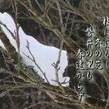 『フォト短歌「冬の花」』の画像