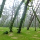 『いつか行きたい日本の名所 風の松原』の画像