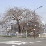 『わが家の桜10 1』の画像