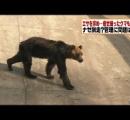 パンくんで有名な熊本阿蘇の動物園でクマの共食い惨殺事件が発生・・・「ヴォー」「ゴォウアー」「バリバリ、ボリボリ」音が響き渡る