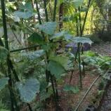 『農園     秋』の画像