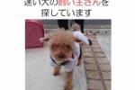 【拡散希望】迷い犬の飼い主さんを探されているそうです!〜南星台で12月22日保護されたトイプードル〜