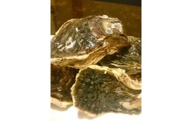『三重県の牡蠣』の画像