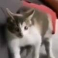 【ネコ】 お父さんが疲れてソファで寝ていた。なんだこの音は!? → 猫はイビキにこうなります…