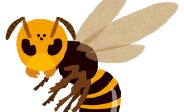 【悲報】大学の外でチャーハン食べてたら「一緒に食べていい??」とスズメバチが相席してきた話