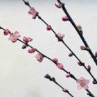 『桃』の画像