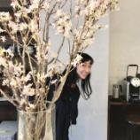 『【トレタWeekly Blog:3月16日〜3月23日】もうすぐ春ですね』の画像