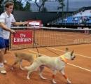 【動画】テニスの試合でボール拾い犬が登場 捨てイヌたちの再就職先として期待
