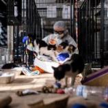 『猫386匹が鳥インフルエンザに感染』の画像
