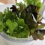 お得感あるこの野菜♡サラトリオがいい!