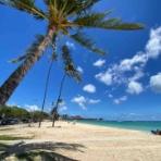 ハワイネコ ブログ