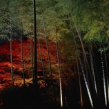 『都会の紅葉』の画像