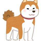 【速報】デカすぎる犬、発見される!!