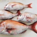 『国東の食環境(310)鯛』の画像