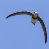 『「夫物芸芸 各復帰其根」鳥たちの脅威の力』の画像