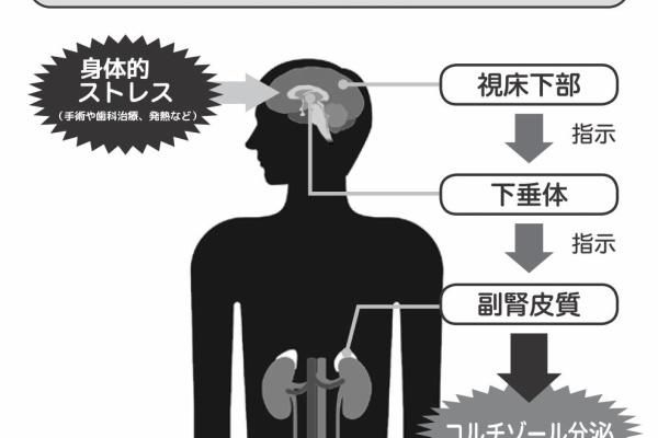 症 低下 下 機能 垂体