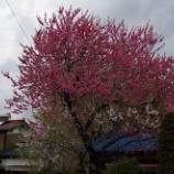 『4月の花②』の画像