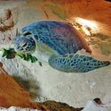 『【香港最新情報】「ラマ島にウミガメの産卵呼び込む」』の画像