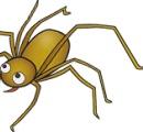 糖尿病の女性、クモにかまれて脚を切断 米