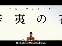 【朗報】 名曲「辛夷の花」のコーラスは橋本慎だった件