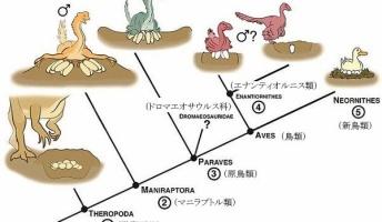 恐竜が鳥類へと進化する過程で分かってきたこと