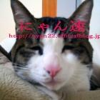 『【ネコ】バンクーバー初の猫カフェが猫不足 』の画像