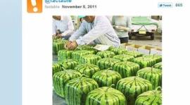 「欲しい!」「クレイジー!」 日本の四角いスイカに海外Twitterユーザーから驚きの声