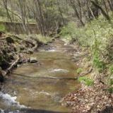 白砂川水系の小沢  2013.5.1(水)の写真