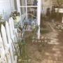 *小庭に沢山バラを咲かせたくて~小庭に植えたバラ