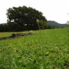 『【動物】農業公園の動物たち【写真あり】』の画像