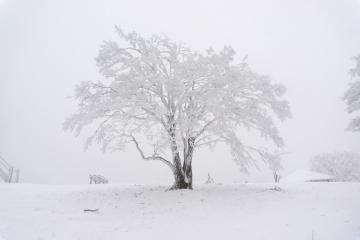 寒いだけの明神平登山