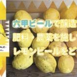 """『【1000缶限定】希少な""""道法レモン""""を贅沢に使った「ホワイトシトラスエール」』の画像"""