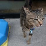 『近所の弁当やの猫チャン』の画像