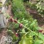 強風でお庭が大変なことに・・・