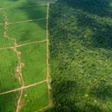 『パーム油畑がアマゾンに拡大中』の画像