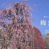 『【動画】 2019年 2月 亀戸 梅まつり  (RX1)』の画像