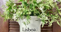 今年もほわほわの白い小花*