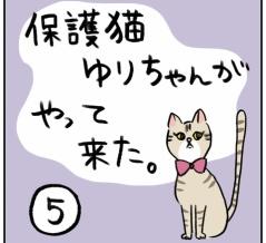 保護猫ゆりちゃんがやってきた⑤