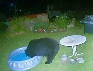 夜中の庭に熊が1頭やってきた!子供用のプールで水を浴びて行ったクマー