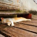 『ブルネイの水上集落に行ってみたら猫の天国だった。』の画像