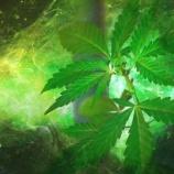 『大麻ががんに効くという100の医学論文リスト』の画像