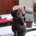 【ネコ】 飼い主が「食器」を洗っていた。もっとゴシゴシするニャ! → 厳しい猫先生はこんな感じ…
